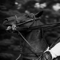 Blackmagic Polo test